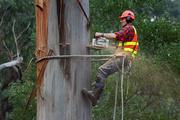 Удаление веток и деревьев