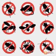 Зачистим ваш дом,  офис,  объект от насекомых и грызунов — вредители не пройдут! Быстро,  конфиденциально,  с гарантией результата