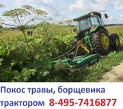 Скосим борщевик трактором 495-7416877 покос борщевика,  аренда трактора с косилкой сосить борщевик